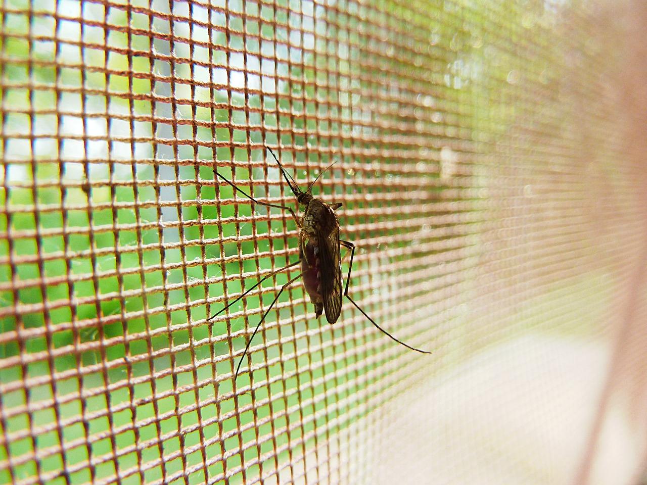 מתכוננים לקיץ: רשת נגד יתושים