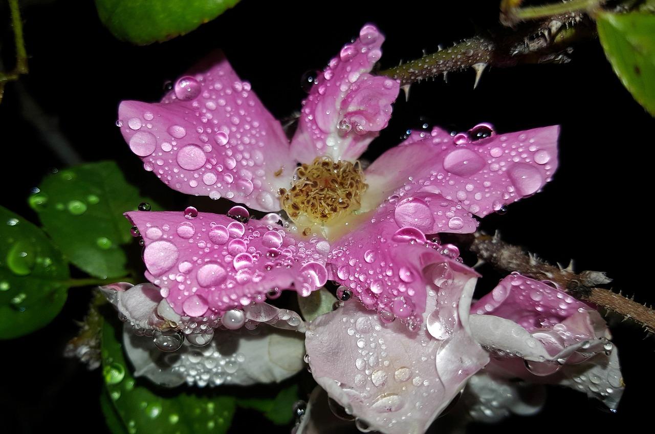 לחות על פרח